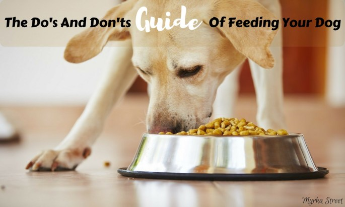The Do's And Don'ts Guide Of Feeding Your Dog (INFOGRAPHIC)