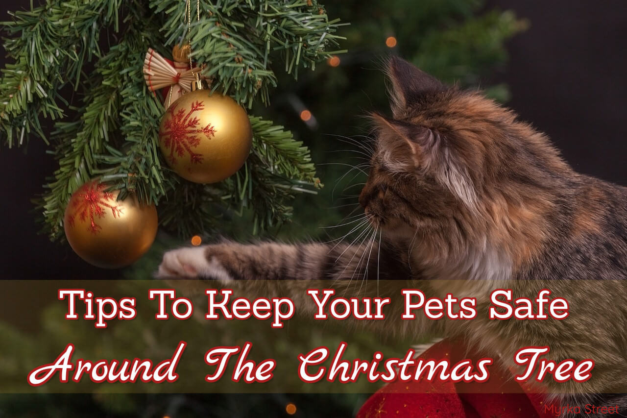 Tips To Keep Your Pets Safe Around The Christmas Tree (INFOGRAPHIC)
