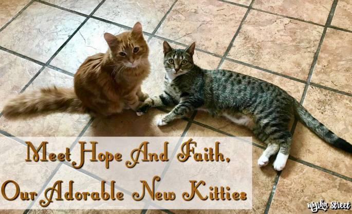 Meet Hope And Faith, Our Adorable New Kitties